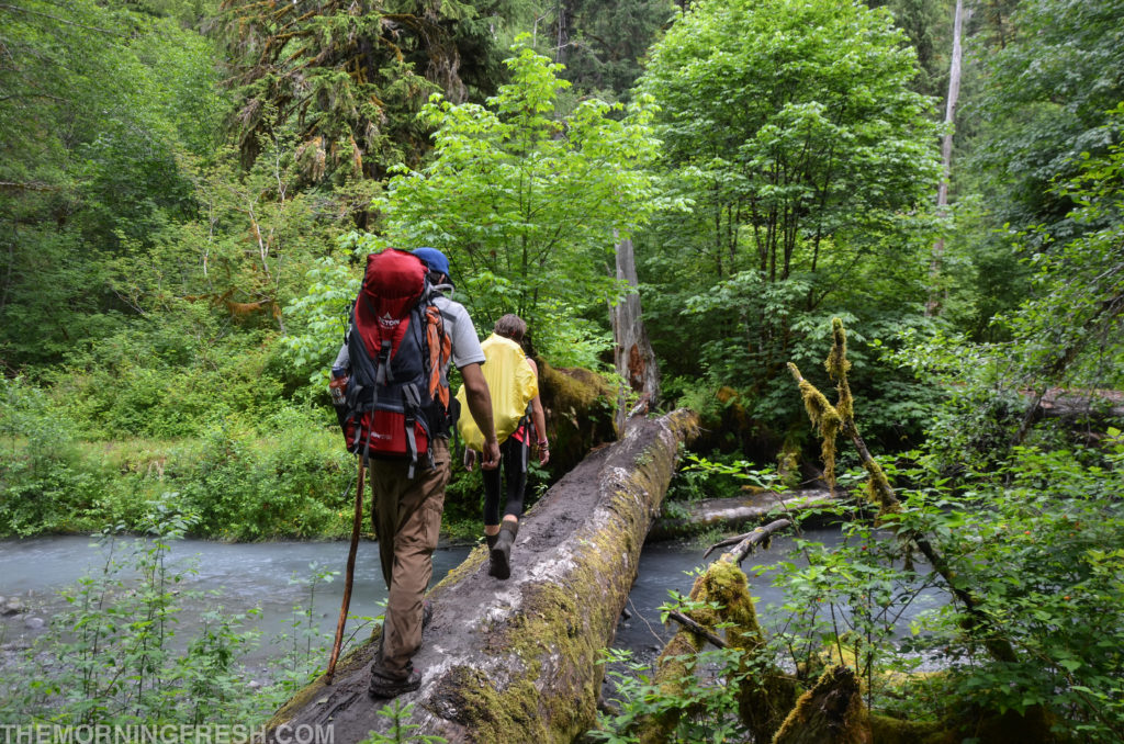 Niko and I trucking over a log bridge on the way out from our Hoh River Trail hike.