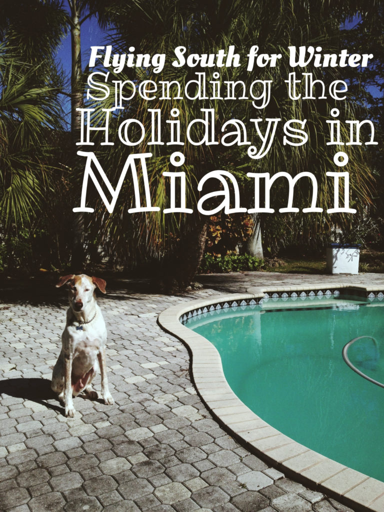 Flying South for the Winter: Why I Spend my Holidays in Miami