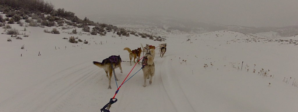 The dog sledding at the Omnigames.