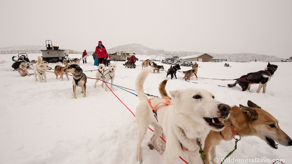 The dogs were ready to rock 'n roll during the Omnigames.  (Photo: David Creech)
