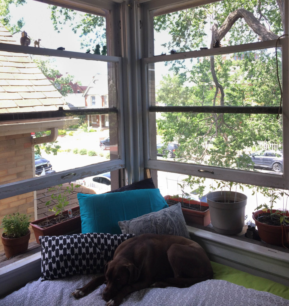 Daila shows us how to proper take advantage of the window situation.