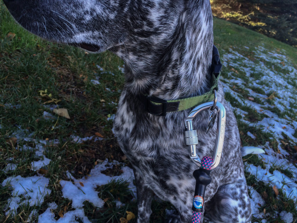 Surepaw Dog Gear leashes review